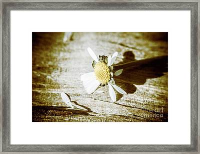 White Summer Daisy Denuded Of Its Petals Framed Print by Jorgo Photography - Wall Art Gallery