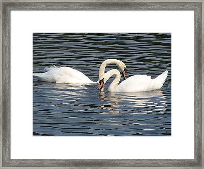 White Swans Framed Print by Joyce Woodhouse