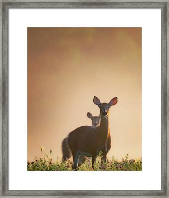 White-tailed Deer 2016 Framed Print by Bill Wakeley