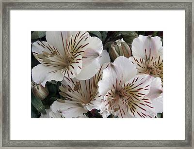 White Tiger Azalea Framed Print by Ben and Raisa Gertsberg