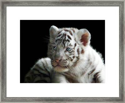 White Tiger Cub Framed Print by Julie L Hoddinott