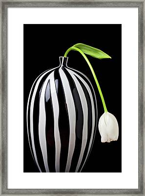 White Tulip In Striped Vase Framed Print by Garry Gay
