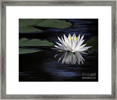 White Water Lily Framed Print by Sabrina L Ryan