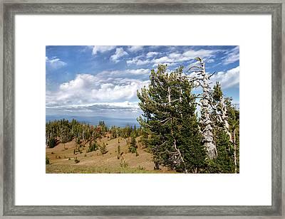 Whitebark Pine Trees Overlooking Crater Lake - Oregon Framed Print by Christine Till