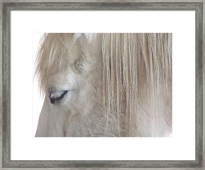 Whiteeyes Framed Print by Todd Sherlock