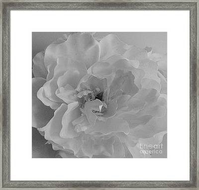 Whiteness Framed Print by Marsha Heiken