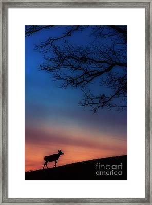 Whitetail At Dawn Framed Print by Thomas R Fletcher