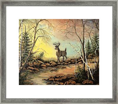 Whitetail Buck Creek Framed Print by Kimberly Benedict