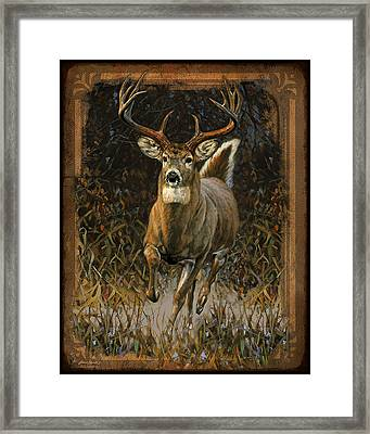 Whitetail Deer Framed Print by JQ Licensing