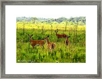 Whitetail Deer Family Framed Print by Barbara Bowen