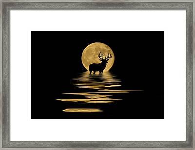 Whitetail Deer In The Moonlight Framed Print by Shane Bechler
