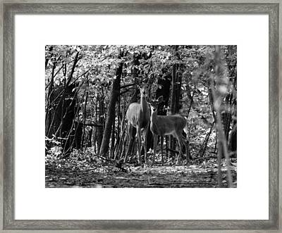Whitetail Walk In The Woods Framed Print by Scott Hovind
