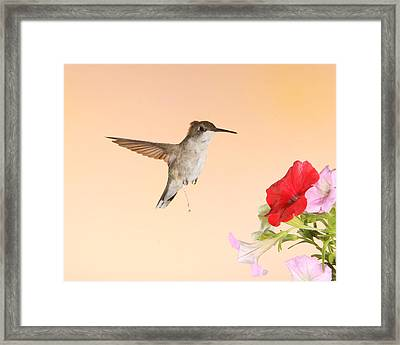 Whiz Kid Framed Print by Gerry Sibell