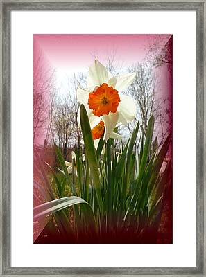 Who Planted Those Flowers Framed Print by Patricia Keller