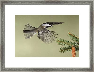 Whodat Framed Print by Gerry Sibell