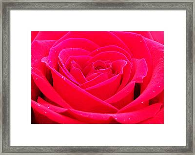 Whole Lotta Rosie Framed Print by Karen M Scovill