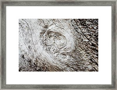 Whorly Wood Framed Print by Lynda Dawson-Youngclaus