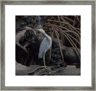 Who's There Framed Print by Debra Larabee