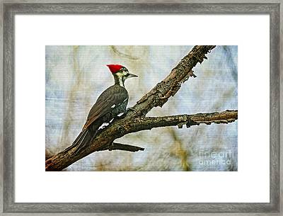 Who's There Framed Print by Lois Bryan
