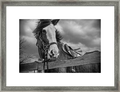 Why Hello There Framed Print by Kristopher Schoenleber