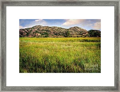 Wichita Mountain Wildflowers Framed Print by Tamyra Ayles