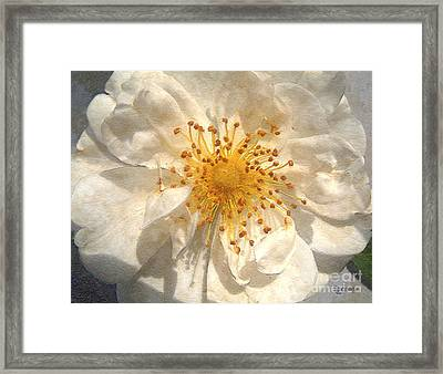 Wide Open Framed Print by RC deWinter