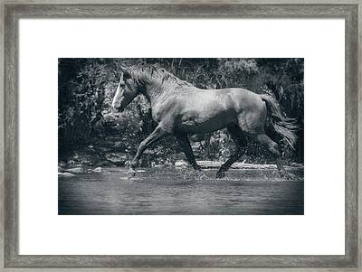 Wild And Free Mustang  Framed Print by Saija Lehtonen