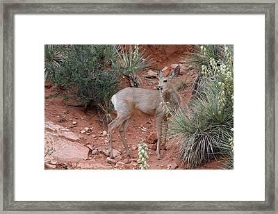 Wild And Pretty - Garden Of The Gods Colorado Springs Framed Print by Christine Till