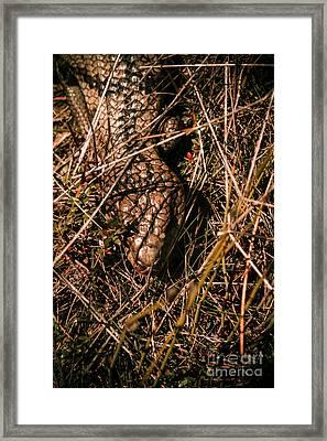 Wild Australian Blue Tongue Lizard Framed Print by Jorgo Photography - Wall Art Gallery