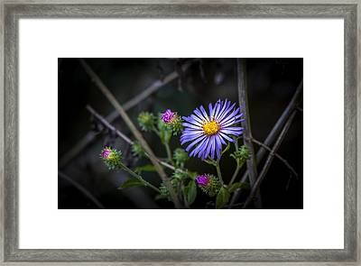 Wild Beauty Framed Print by Marvin Spates