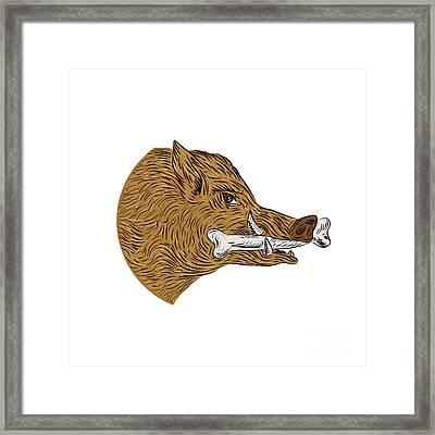 Wild Boar Razorback Bone In Mouth Drawing Framed Print by Aloysius Patrimonio