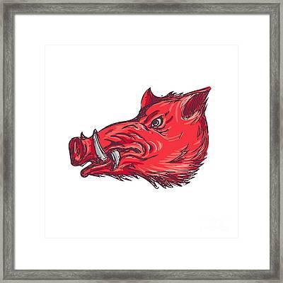 Wild Boar Razorback Head Side Drawing Framed Print by Aloysius Patrimonio