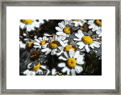 Wild Daisies Framed Print by Carol  Eliassen