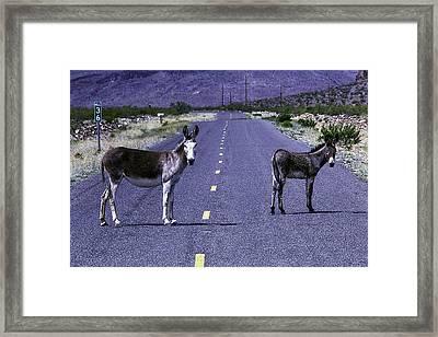 Wild Donkeys On Road To Oatman Framed Print by Garry Gay