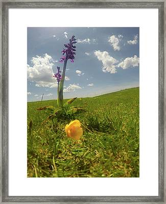 Wild Flowers Framed Print by Contemporary Art