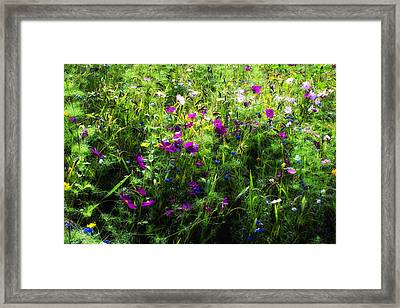Wild Flowers In The South Of France Framed Print by Georgia Fowler