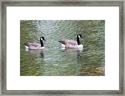 Wild Geese On A Lake 6 Framed Print by Lanjee Chee