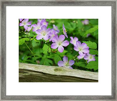 Wild Geraniums Framed Print by Michael Peychich