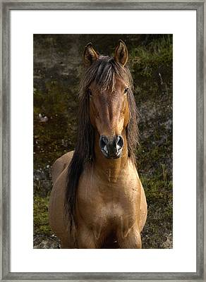 Wild Horse Equus Caballus In Open Framed Print by Pete Oxford