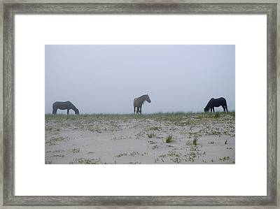 Wild Horses In The Sand Dunes On Sable Framed Print by Justin Guariglia