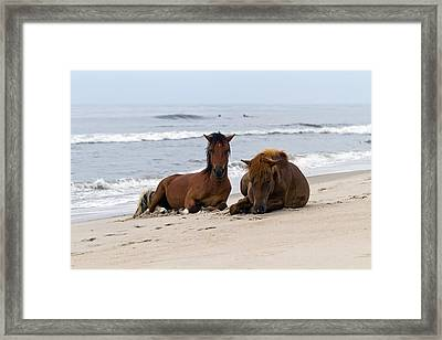 Wild Horses Of Assateague Island Framed Print by Edward Kreis