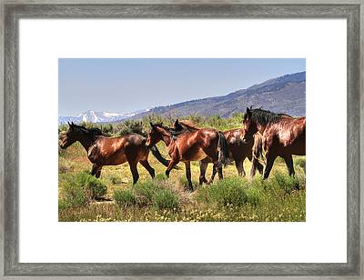 Wild Horses Of Nevada Framed Print by Donna Kennedy