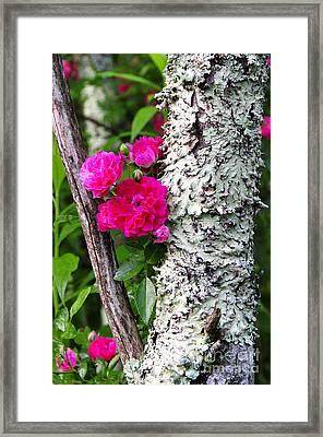 Wild One Framed Print by Thomas R Fletcher