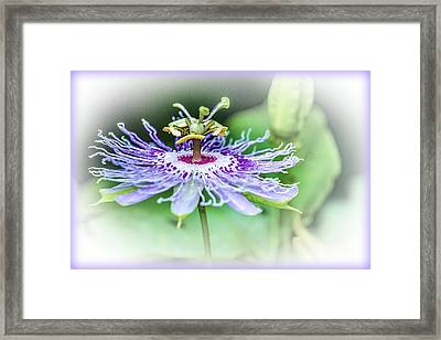 Wild Passion - Floral Framed Print by Barry Jones