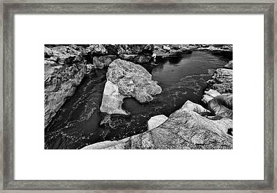 Wild Framed Print by Rico Besserdich