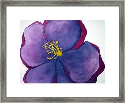 Wild Rose Framed Print by Anna Villarreal Garbis