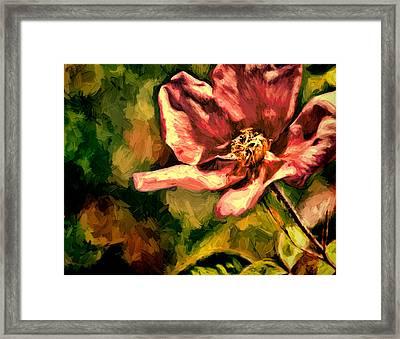 Wild Rose Framed Print by John K Woodruff