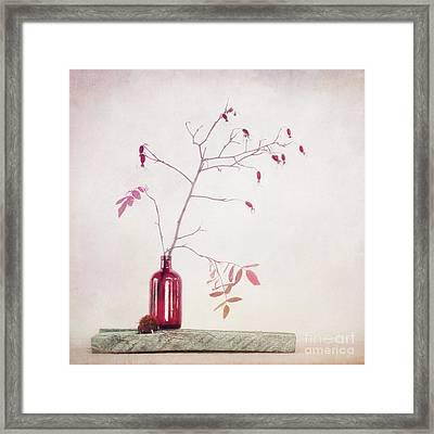 Wild Rosehips In A Bottle Framed Print by Priska Wettstein