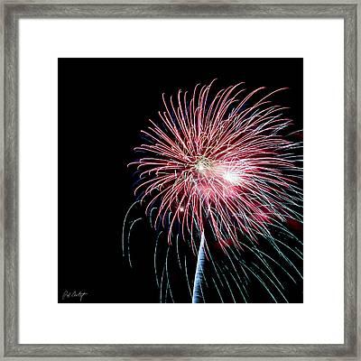 Wild Sky Flower Framed Print by Phill Doherty