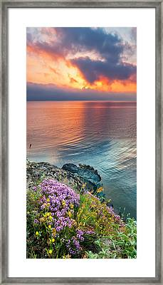 Wild Thyme By The Sea Framed Print by Evgeni Dinev